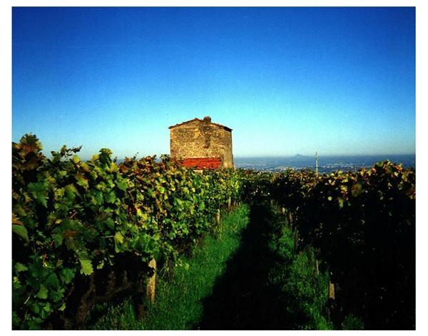 Casale mattia vini laziali grappe vini e prodotti tipici for Prodotti tipici romani